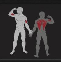 Impulse IF93 treniruojami raumenys