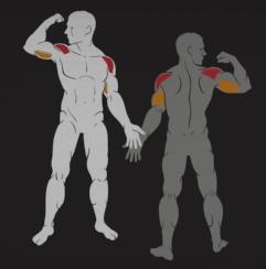 IF9312 treniruojami pečių raumenys