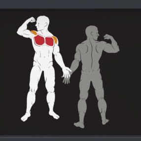 IF9304 treniruojamos raumenų grupės