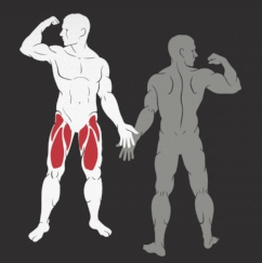 IF9305 treniruojami raumenys
